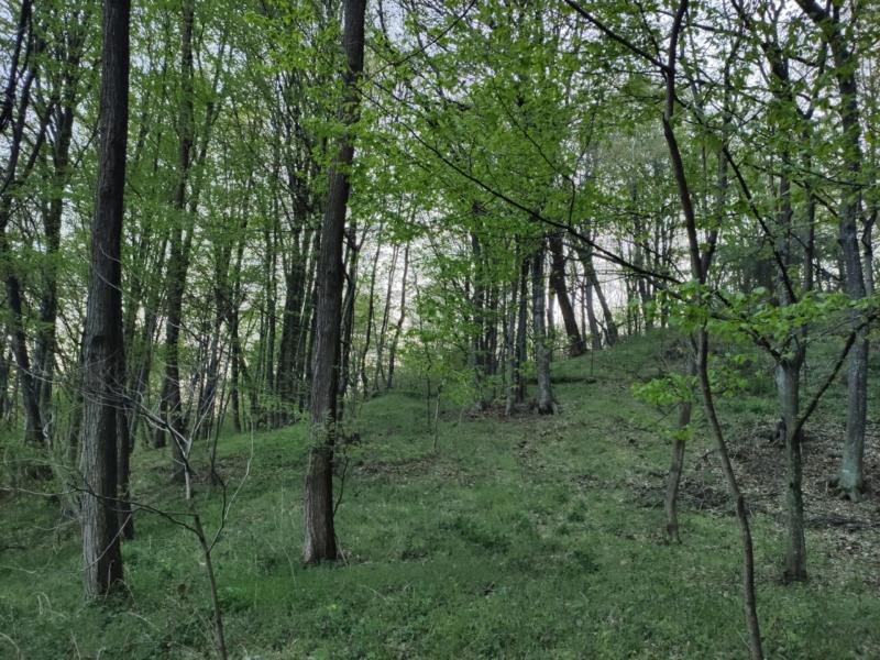 Tur virtual într-o primăvară Musceleană 3