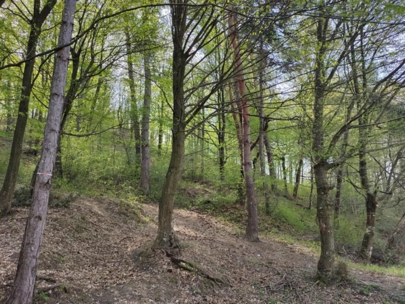 Tur virtual într-o primăvară Musceleană 15