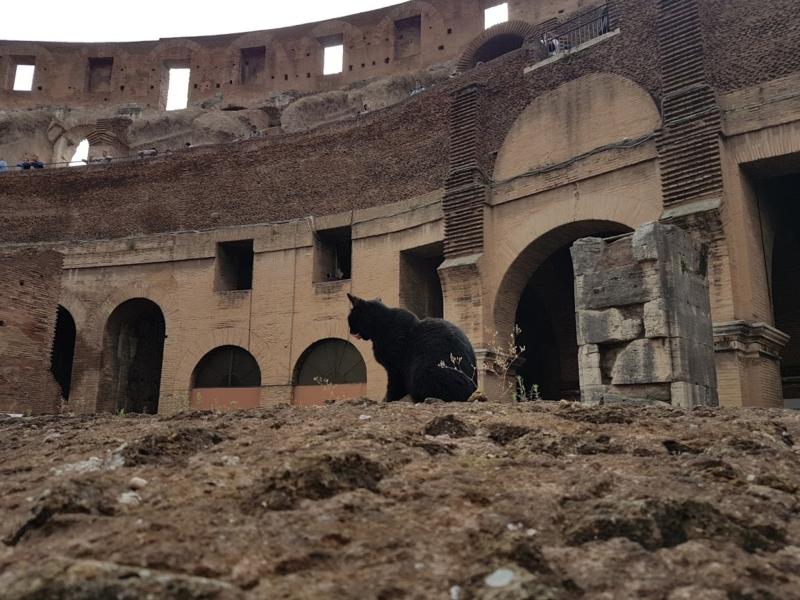 Roma - Italia 3