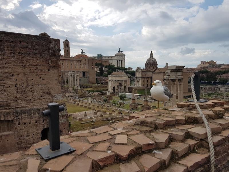 Roma - Italia 8