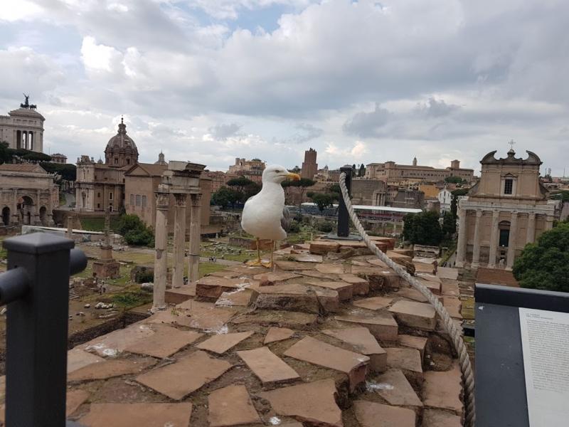 Roma - Italia 4