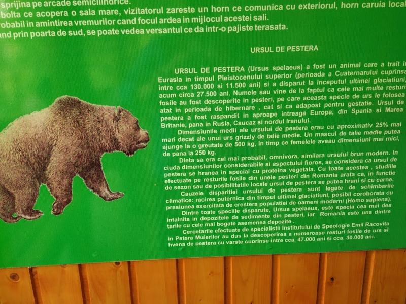 Gorj - România 6